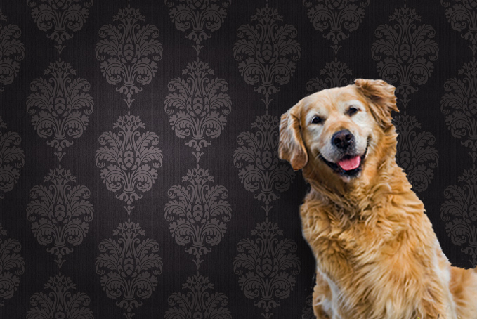Dog against brown pattern wallpaper background