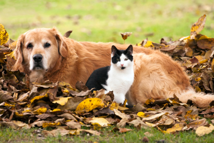 Dog and cat outdoors with fall leaves