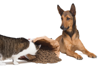 Dog looking at a cat eat from a bag