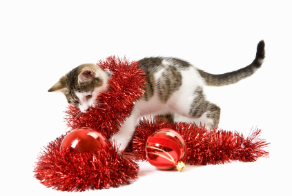 Cat wrapped in tinsel and behind baubles