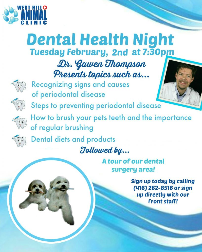 pet dental night