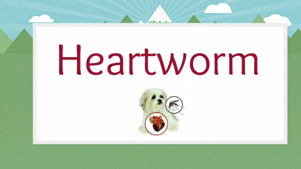 Heartworm-test