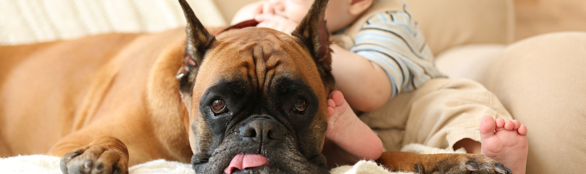 Dog lying down next to a baby