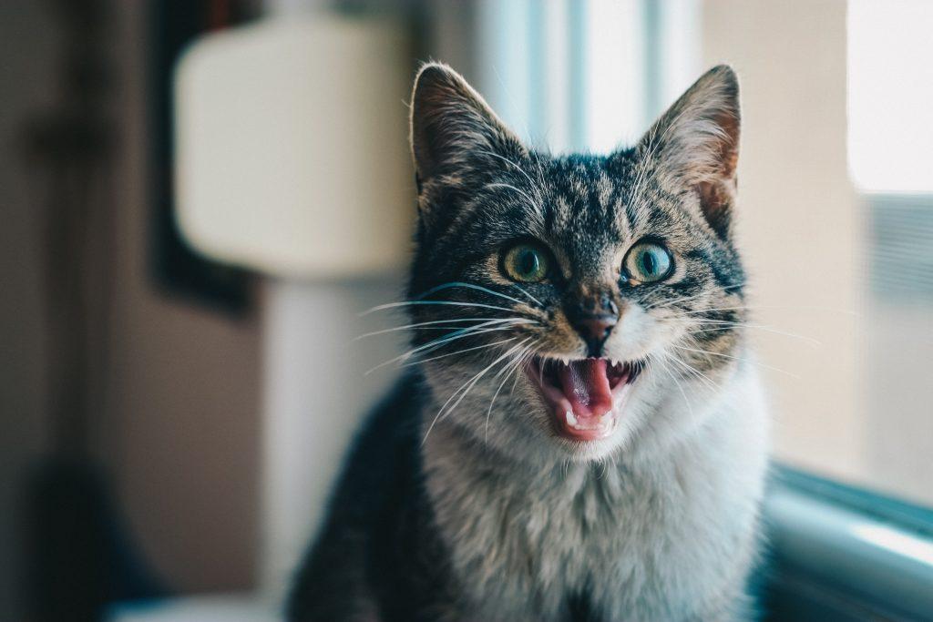 cat near window
