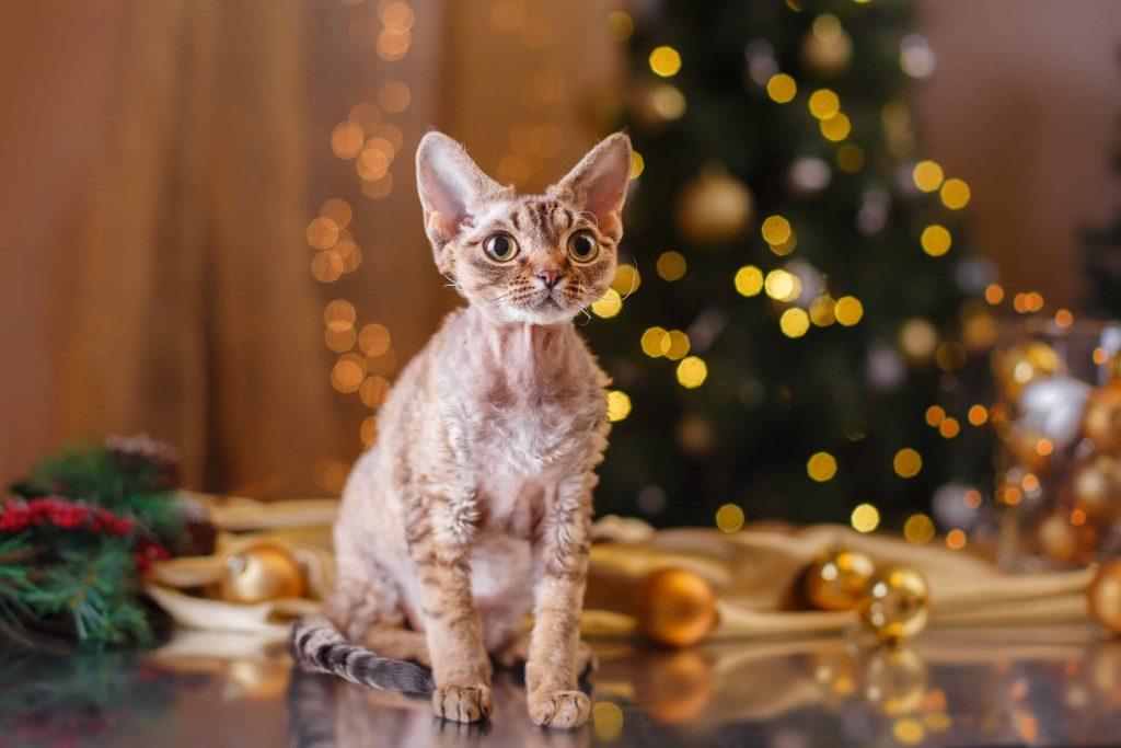 new years eve cat