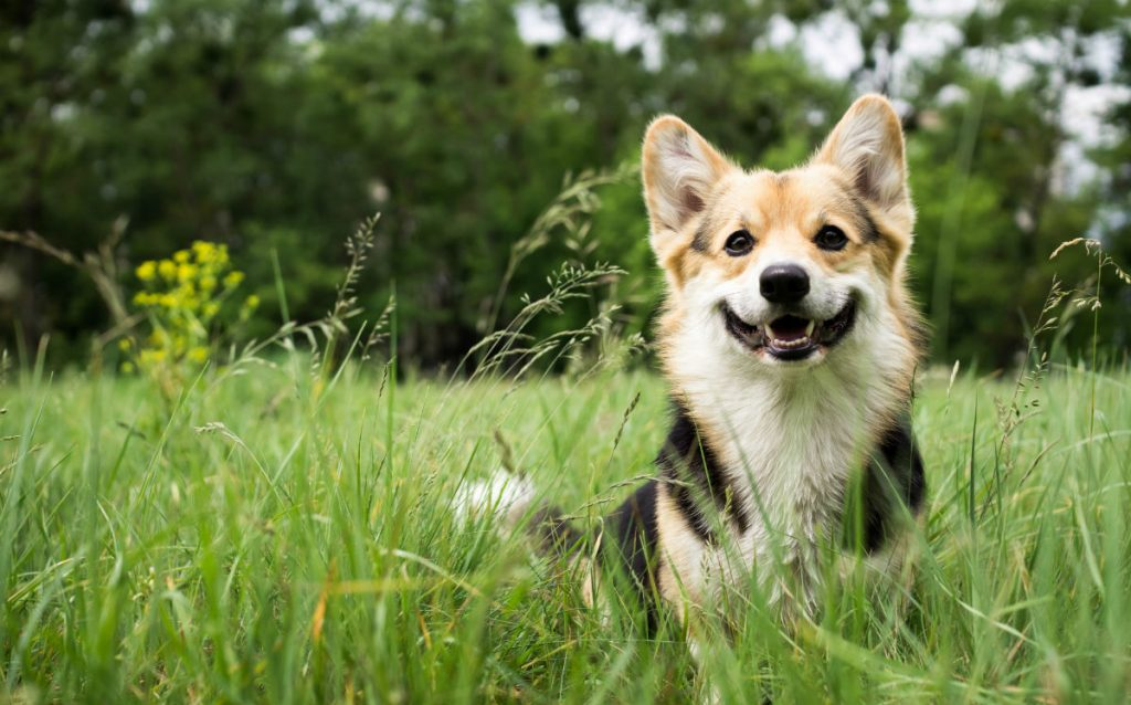 cute dog in grass