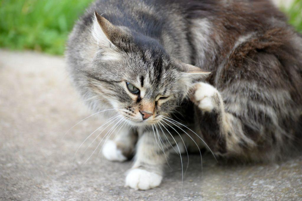 Cat scratching itself outdoors