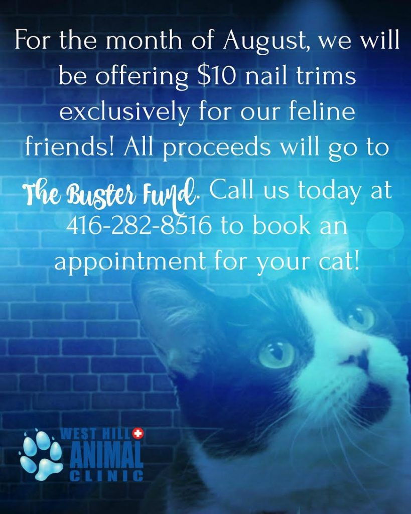 flyer for nail trims