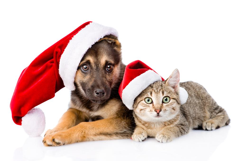 Dog and cat wearing Santa hats