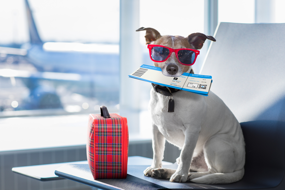 Dog wearing sunglasses and holding a plane ticket at the airport