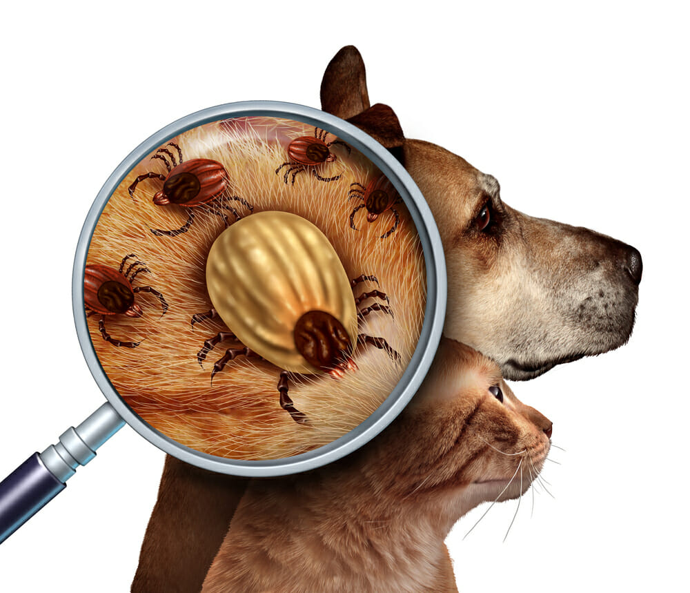 Dog and cat with magnifying glass showing ticks in fur