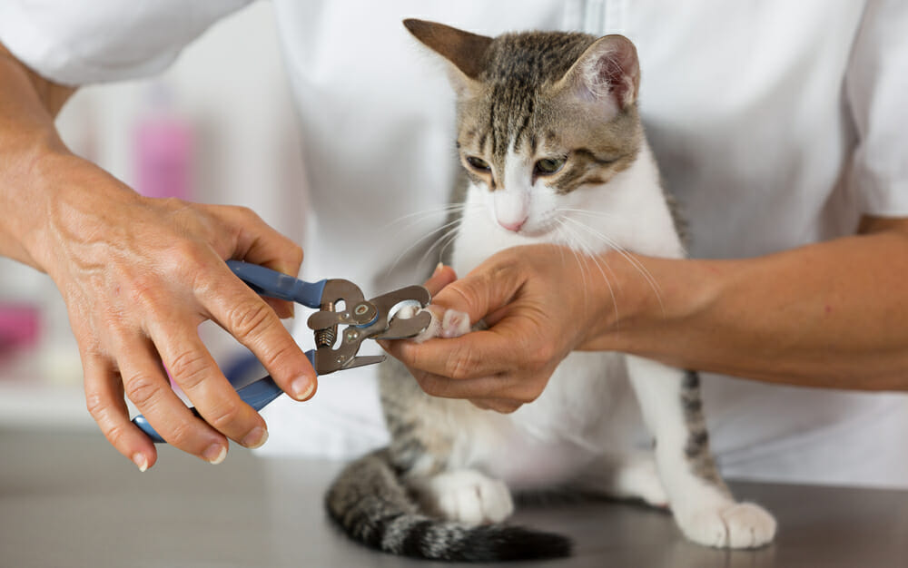 Cat getting its nails trimmed