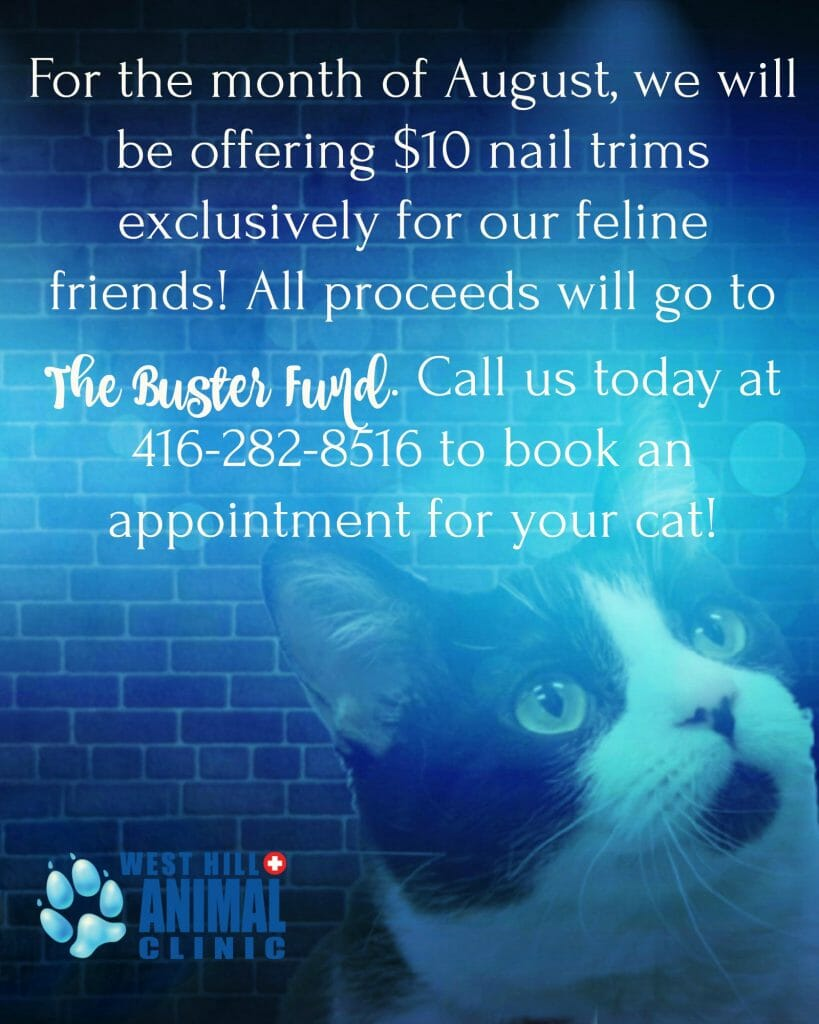 West Hill Animal Clinic $10 nail trims August Promotions poster