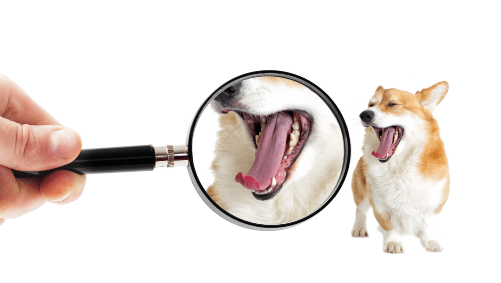 Dog with mouth open and human inspecting its mouth with a magnifying glass